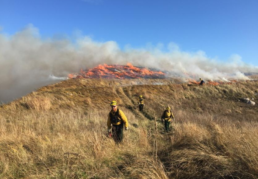 A prescribed burn at Penikese Island Sanctuary. [Courtesy/MassWildlife]